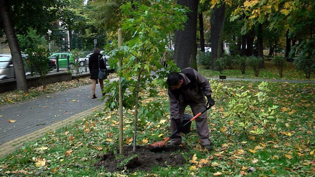 drzewa w parku 2 pop