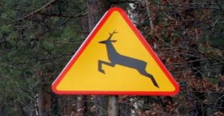 Kolizje z dzikimi zwierzętami. Apelujemy o ostrożność!