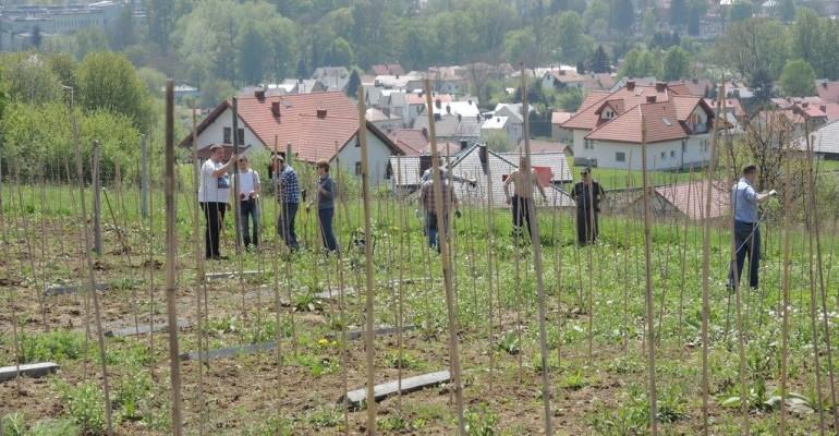 Trwa budowa rusztowań w Winnicy Jasło (ZDJĘCIA)