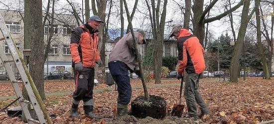 Nowe drzewa i krzewy na terenie miasta. W większości są to rzadko spotykane gatunki (ZDJĘCIA)