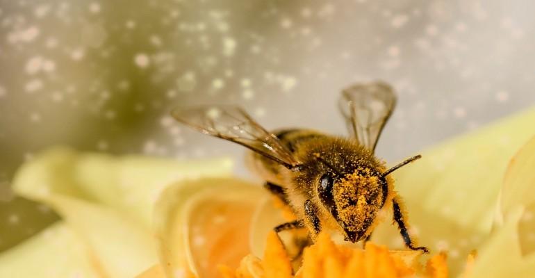 To możliwość zdobycia wiedzy z pierwszej ręki. W PWSZ o pszczołach (ZDJĘCIA)